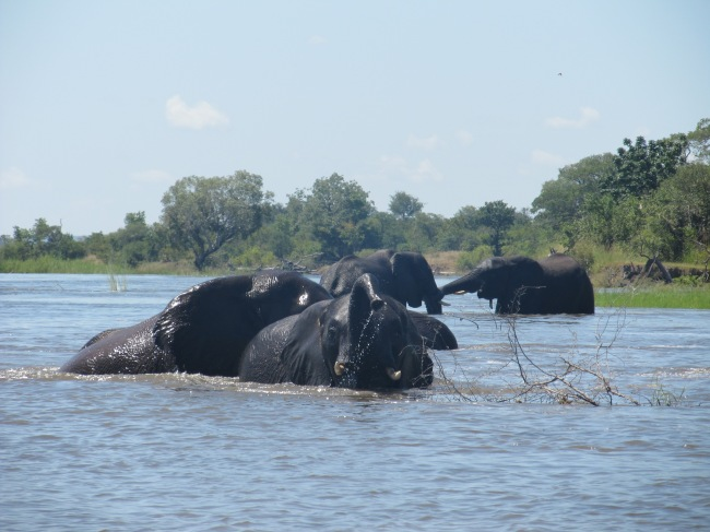 Upper Zambezi raft float