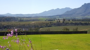 Ernie Els Estate looking accross to Helderberg (1)